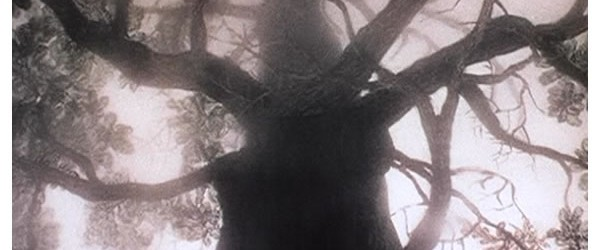herisson_brume_arbre