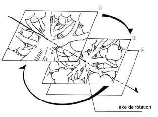 schema_nausicaa_arbre